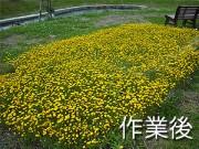 花の苗植え込み2