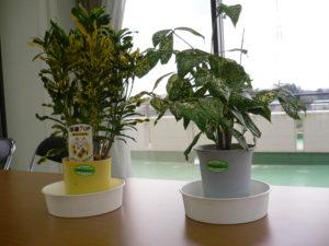 観葉植物のリース 小鉢 (月2回交換)