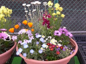花・・・寄せ植え・・・