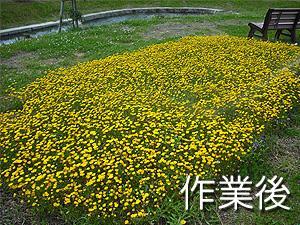 植栽管理業務(花の苗植え込み)